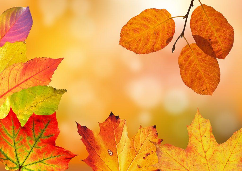 Autumn Transformation Programme